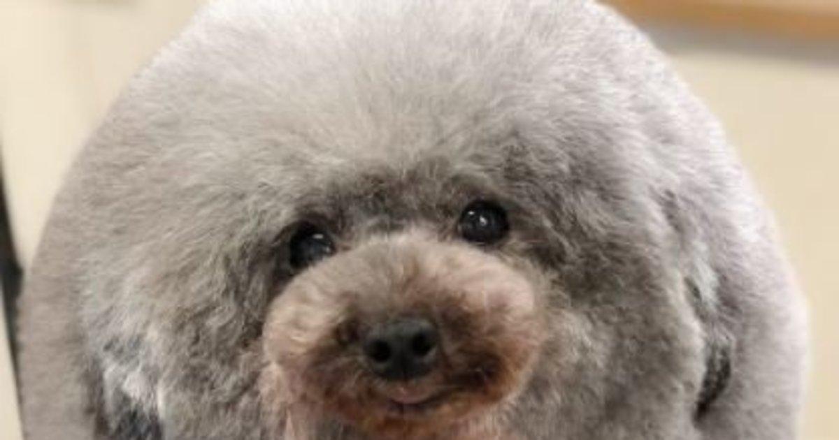 Αυτός ο σκύλος πήγε για μαλλί και βγήκε κουρεμένος. Και πλέον μοιάζει με φώκια